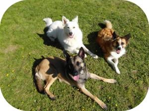 conseil-en-education-laika-2-chiens-ba