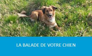 la-balade-de-votre-chien-01
